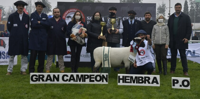 Gran Campeona Hembra PO